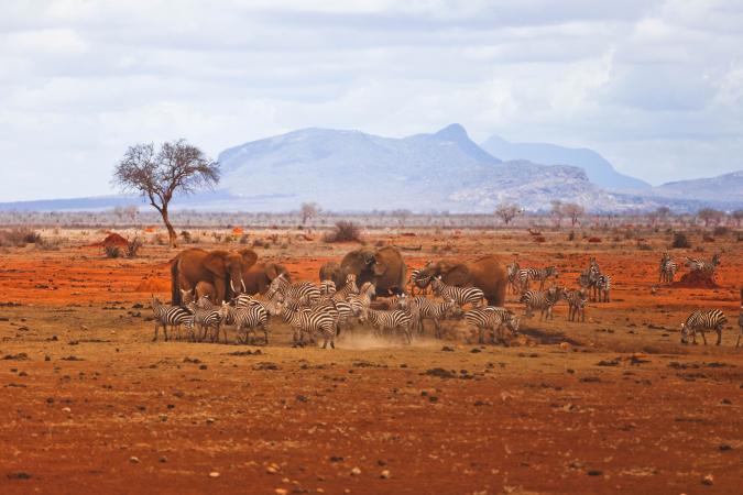 Le Safaricom Marathon, au Kenya