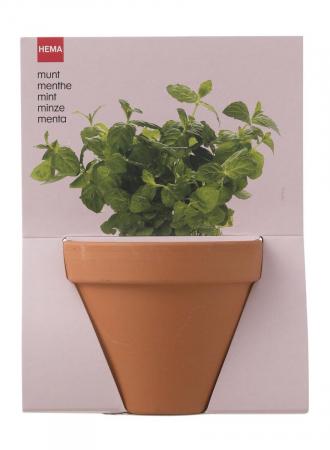 Plantzaad voor munt in pot