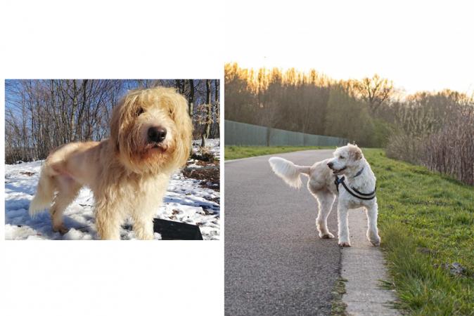 Jasmine vond haar adoptiehond Lily in Roemenië