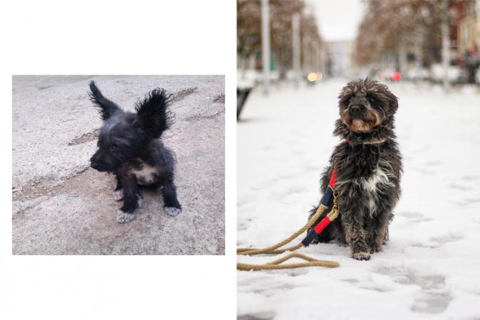 Muran haalde 6 jaar geleden haar eerste adoptiehond Magare in huis