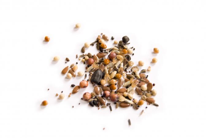 Des graines pour oiseaux