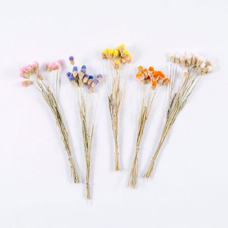 Des bouquets de fleurs séchées