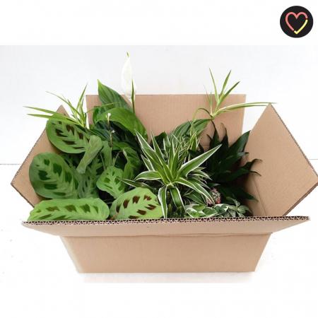 Verrassingsbox met een mix van planten