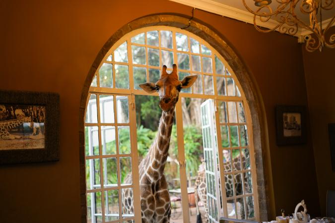 L'hôtel Giraffe Manor – Kenya