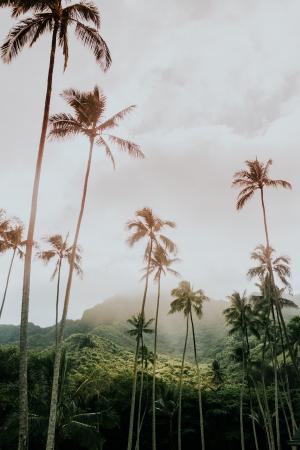 L'île d'Oahu – Hawaï