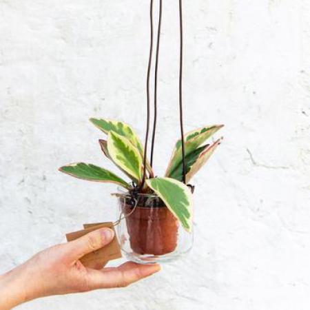 Plantenhanger van gerecycleerd glas