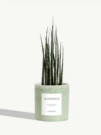 Un pot de plantes personnalisé