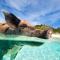 10. Er is een onbewoond eiland in de Bahama's dat Pig Beach heet en waar de hele tijd varkentjes rondzwemmen.