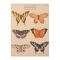 Poster met afbeeldingen van vlinders