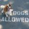 15. Deze hond verbergt heel slim de 'NO'.