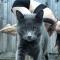 Als die yoga-oefening eindelijk lukt, maar je kat de boel saboteert.