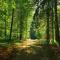 Le week-end du bois et des forêts d'Ardenne – PARTOUT EN WALLONIE