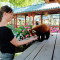 Il faut toujours tenir sa main à plat pour nourrir les pandas roux!