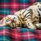 Leeuw (23/07 – 23/08): een Bengaalse kat
