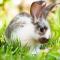 Weegschaal (24/09 – 23/10): een konijn