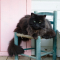 Boogschutter (23/11 – 21/12): een oudere kat
