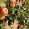 4. Pluk zelf je appels…