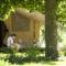 Cosy Camp – Chamalières-sur-Loire
