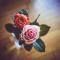 2 rozen