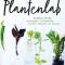 Het plantenlab vanJudith Baehner