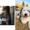 Yilka adopteerde 1,5 jaar geleden haar hond Max uit het asiel