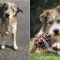 Sofie adopteerde Romeo via een organisatie in Griekenland