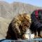 4. Mastiff Tibétain – De 1 000 à 9 000 euros