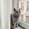 Product Manager Pockets Jolien (29) + Britse korthaar en kattin Bobbi (bijna 4)