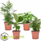 Set van luchtzuiverende kamerplanten