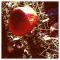 Rood-met-witte-stippen-sprookjespaddenstoelen