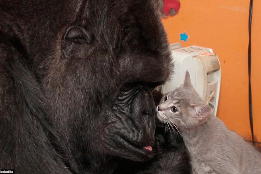 scène rencontres chat Comment fonctionne le carbone datant roches travail