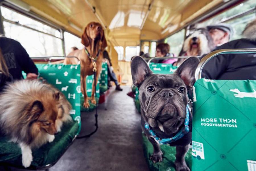 LOL: Londen lanceert tourbus speciaal voor honden