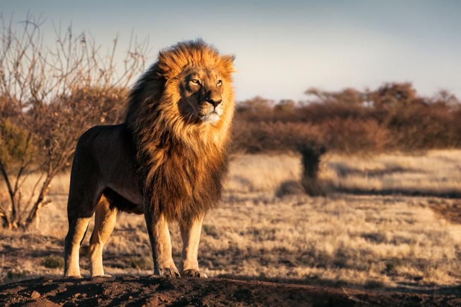Le Portugal Va Enfin Interdire Les Animaux Sauvages Dans Ses Cirques