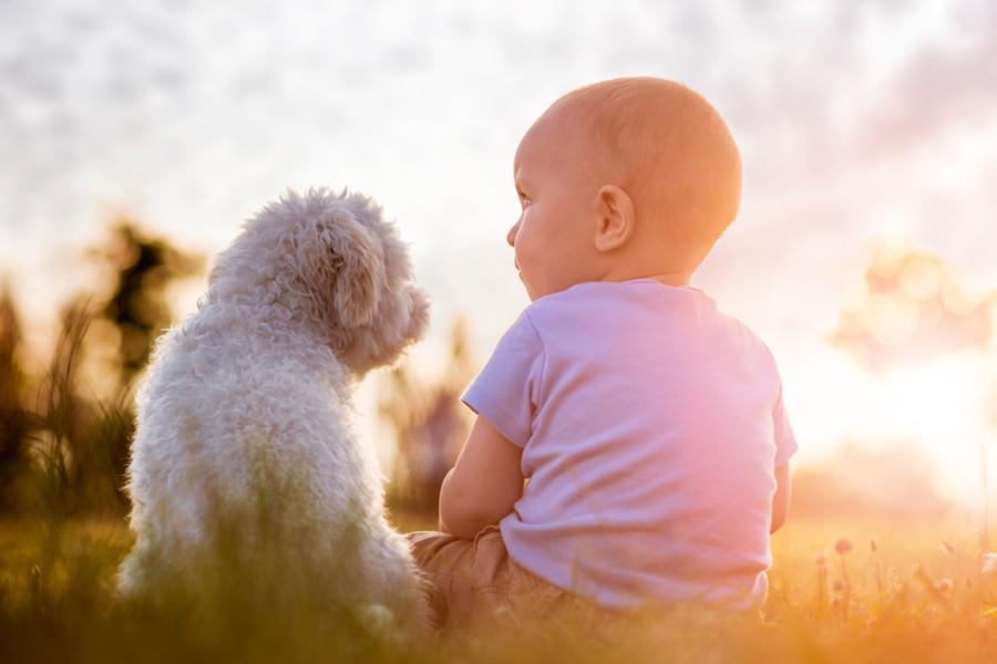 11 Conseils Pour Préparer Son Chien à Larrivée De Bébé