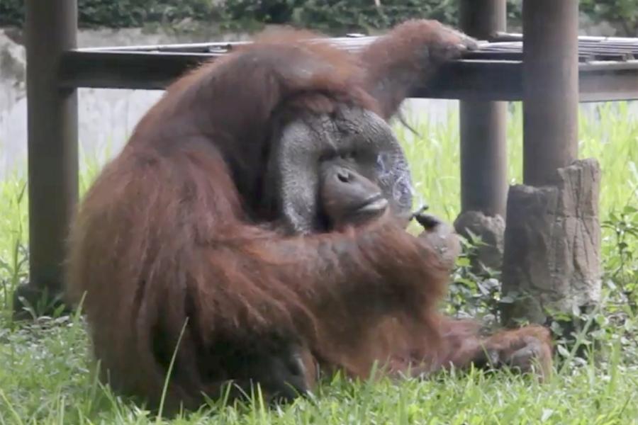 Indonesia Animal Welfare Society