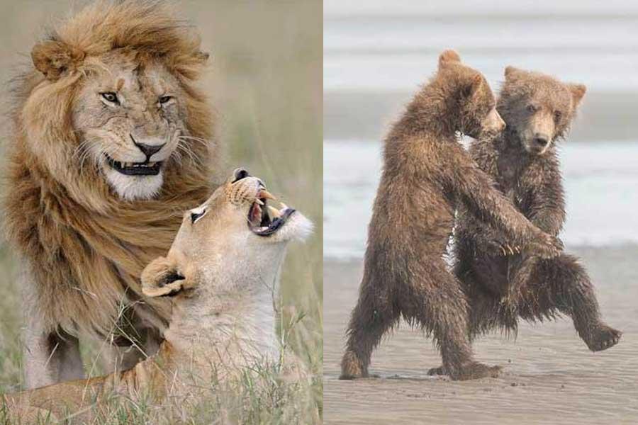 photos animaux drôles