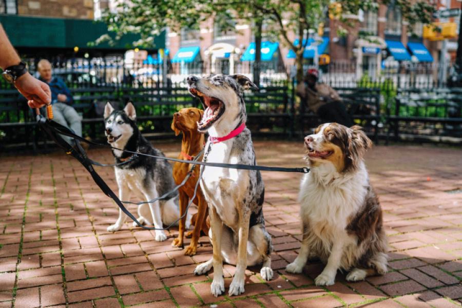 populairste hondenras