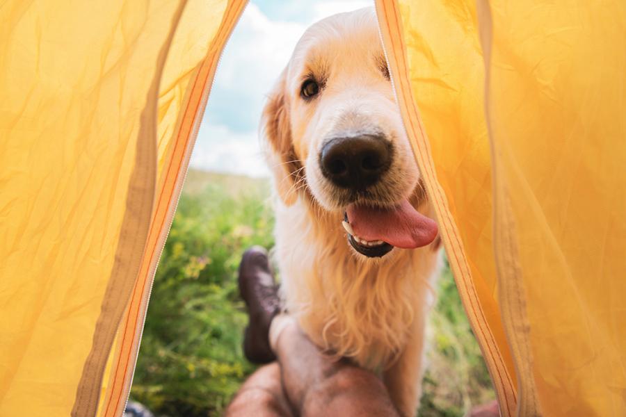 Op reis met je hond