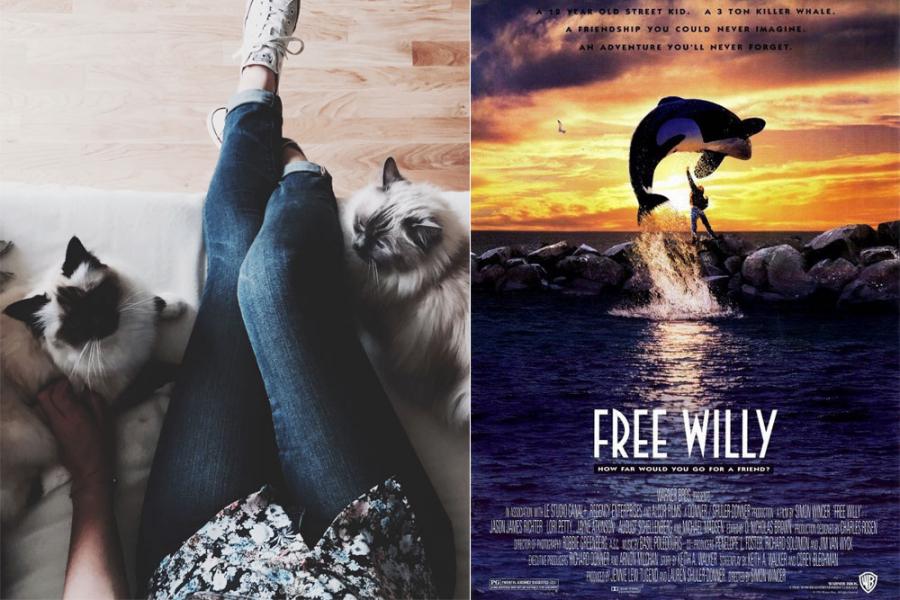 dierenfilms