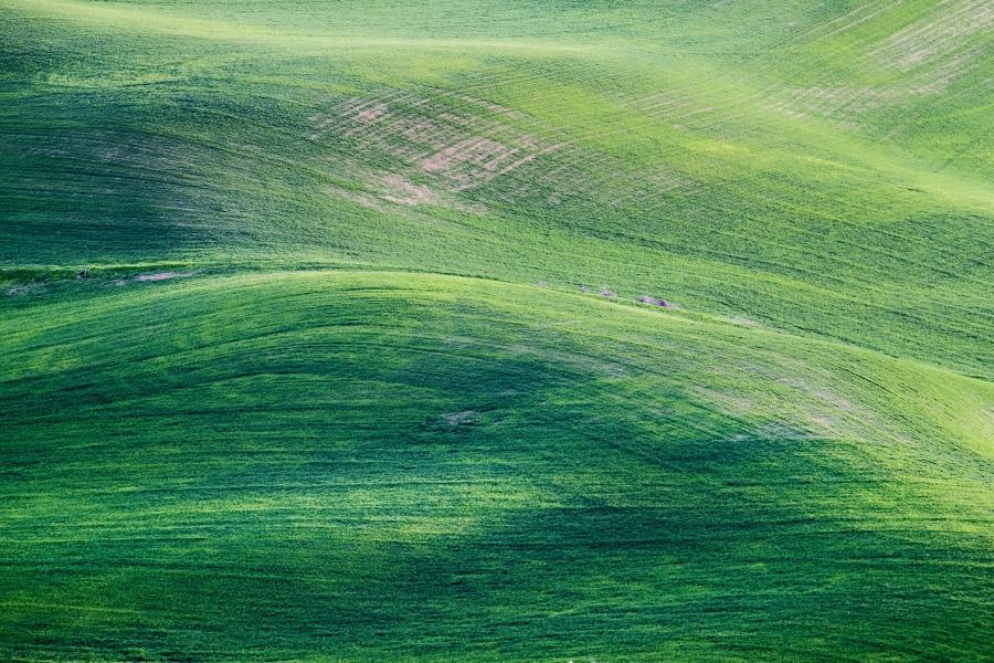 fond vert instagram - pexels - jesse zheung