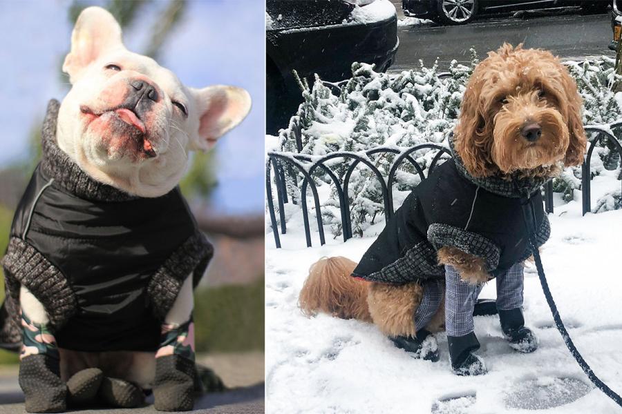 Walkee Paws legging hondjes
