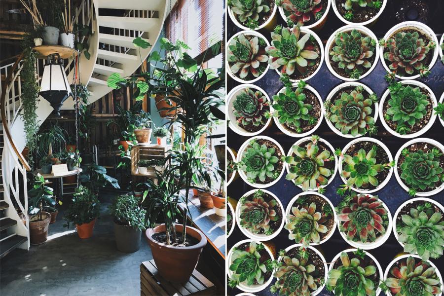 plantenverkoop