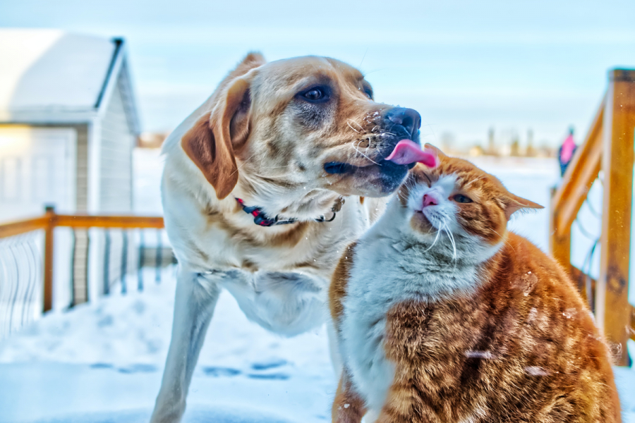 cat vs. dog challenge