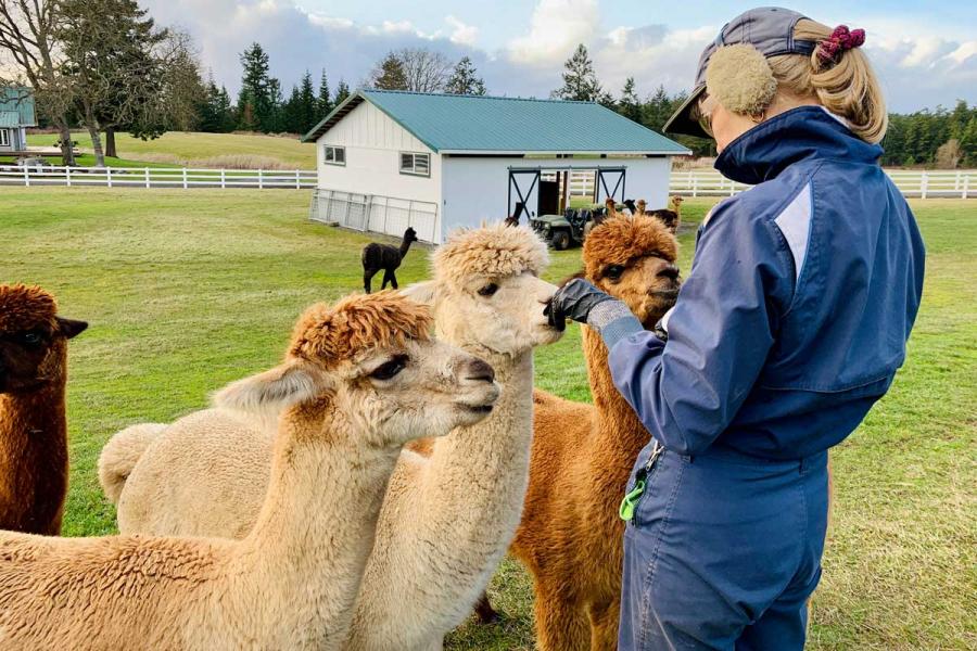 alpaca's