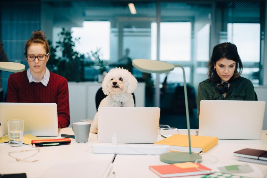 Tout savoir avant d'amener votre chien au boulot - Getty Images