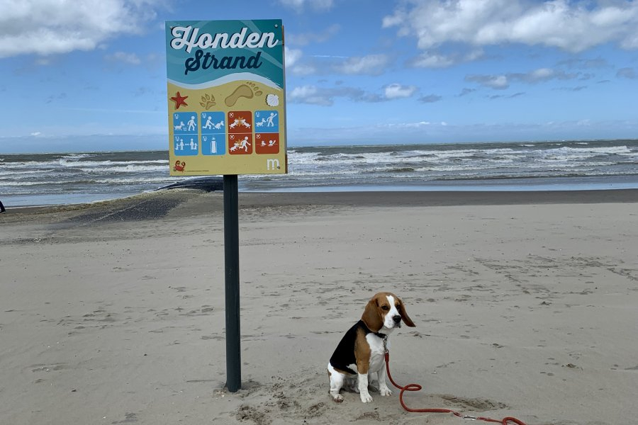 Plage pour chiens - Middelkerke - Flair