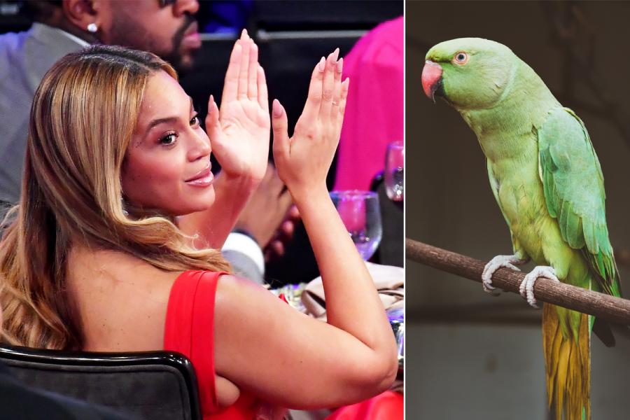 papegaai beyoncé