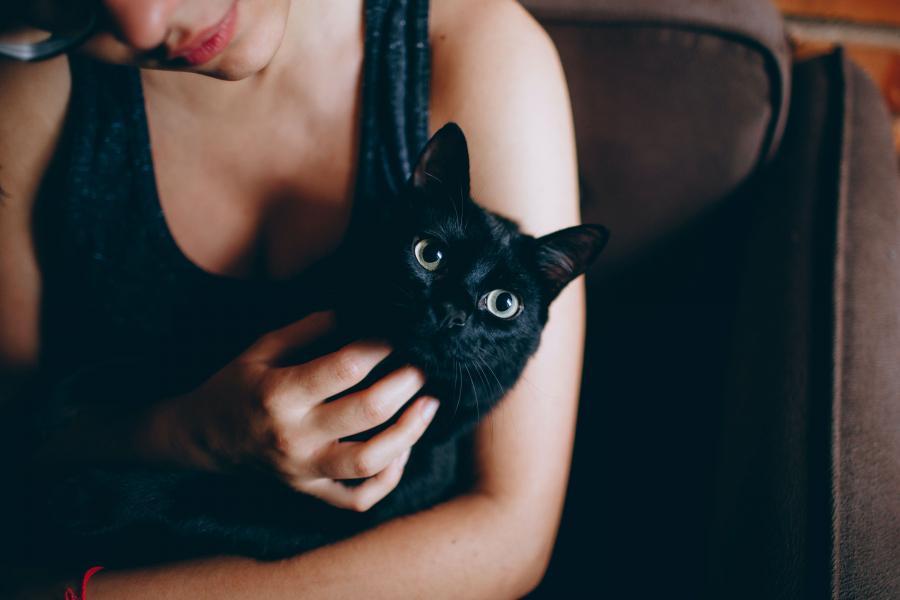 kattenouder