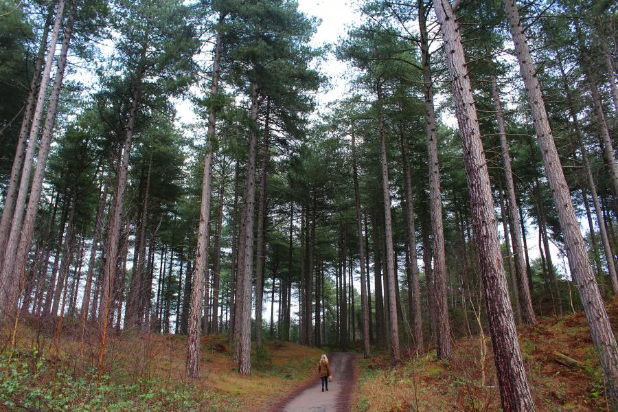 Wandelingen bos