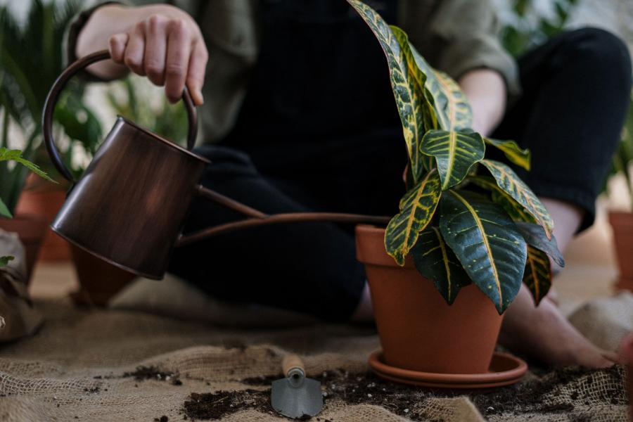 populaire planten 2021